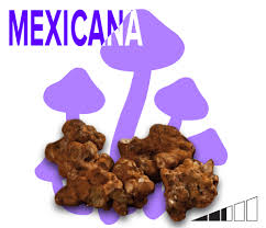 Buy Mexicana truffles for sale