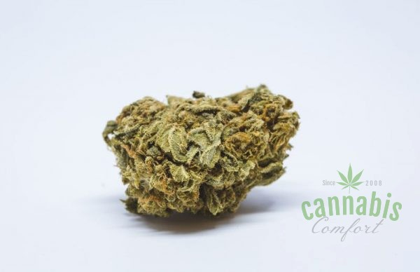 Thin Mint Girl Scout Cookies Marijuana Strain