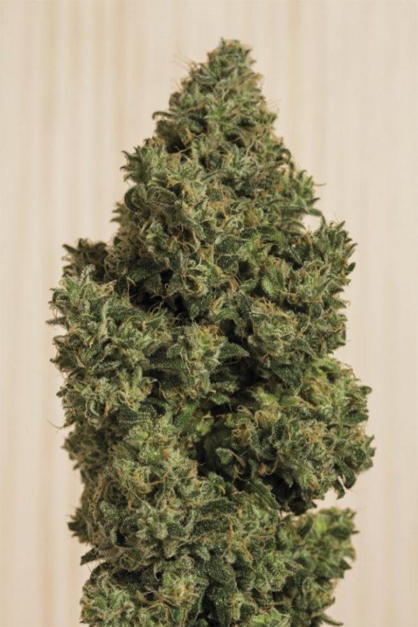 Buy Blue Dream CBD Hemp Flower Online
