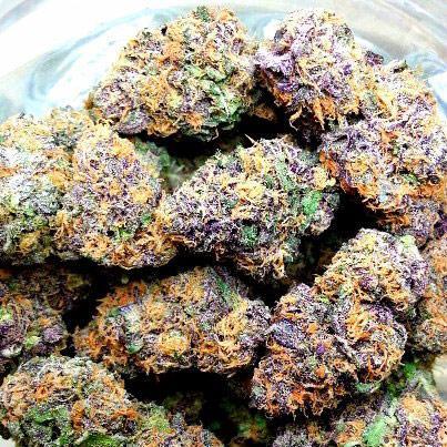 Buy Gelato Cannabis Seeds | Buy Gelato Strain