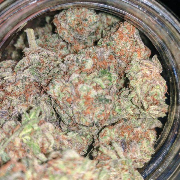 Buy Purple Punch Marijuana Strain Online