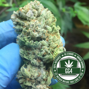 Buy Gorilla Glue strain online