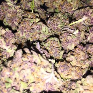 Purple Voodoo Cannabis Strain Online